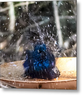 Grackle Bath Metal Print