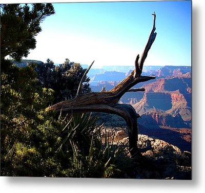 Grand Canyon Dead Tree Metal Print by Matt Harang