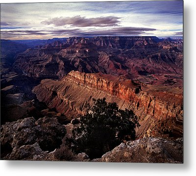 Grand Canyon Golden Ridgeback Metal Print