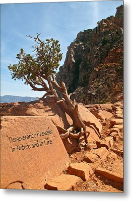 Metal Print featuring the photograph Grand Canyon Survivor by Kathleen Scanlan