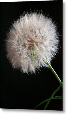 Metal Print featuring the photograph Grand Mountain Dandelion by Kevin Bone