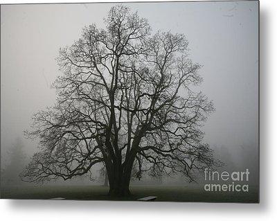 Grand Oak Tree Metal Print by Rich Collins