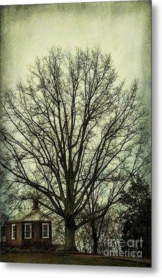 Grand Old Tree Metal Print by Terry Rowe