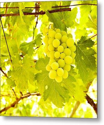 Grape Branch Metal Print by Anna Om