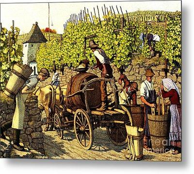 Grape Harvest 1890 Metal Print by Padre Art