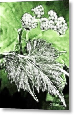 Grape Vine Leaf Metal Print by Odon Czintos