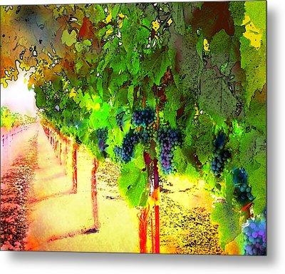 Grape Vines Metal Print by Cindy Edwards