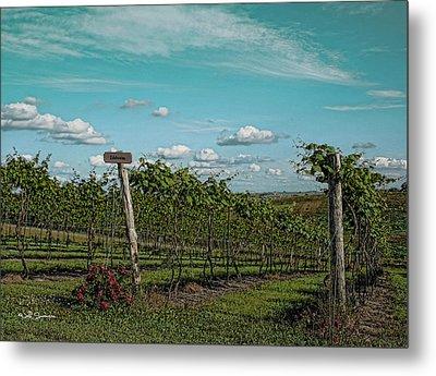 Grape Vines Metal Print by Jeff Swanson