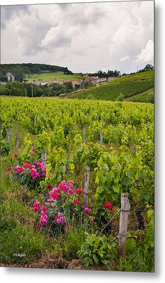 Metal Print featuring the photograph Grapes And Roses by Allen Sheffield