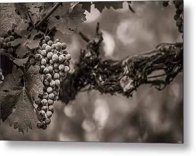 Grapes In Grey 1 Metal Print