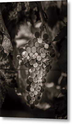 Grapes In Grey 3 Metal Print by Clint Brewer