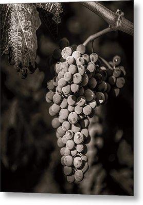 Grapes In Grey 4 Metal Print