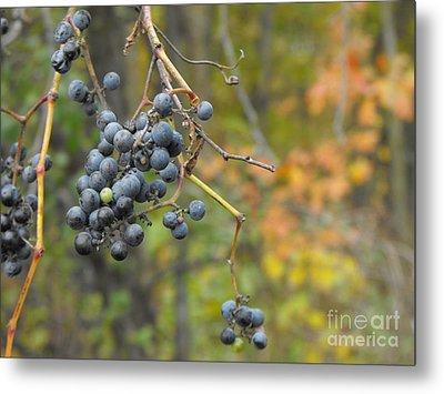 Grapes Left Metal Print