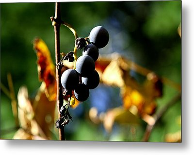 Metal Print featuring the photograph Grapes On The Vine No.2 by Neal Eslinger