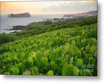 Grapevines And Islet Metal Print by Gaspar Avila