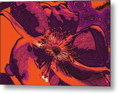Metal Print featuring the photograph Graphic Rose by Kelly Nowak