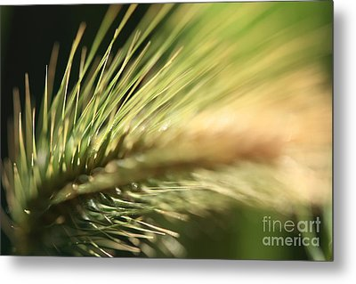 Metal Print featuring the photograph Grass 1 by Rebeka Dove