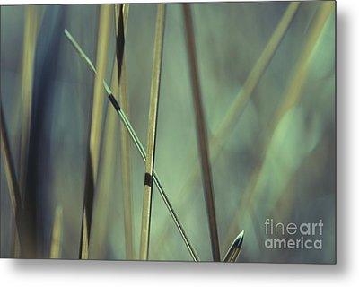 Grass Abstract - 03439gr Metal Print by Variance Collections