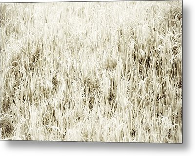 Grass Abstract Metal Print by Elena Elisseeva