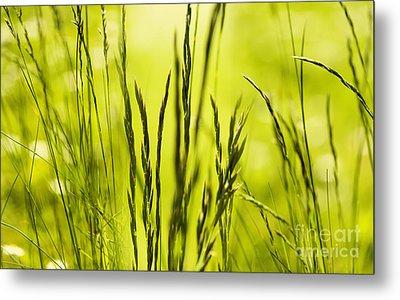 Grass Abstract Metal Print by Svetlana Sewell