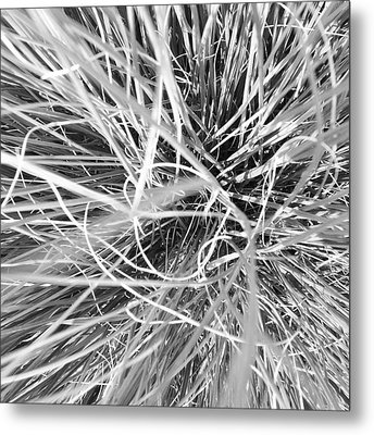 Grass Metal Print by Christy Beckwith