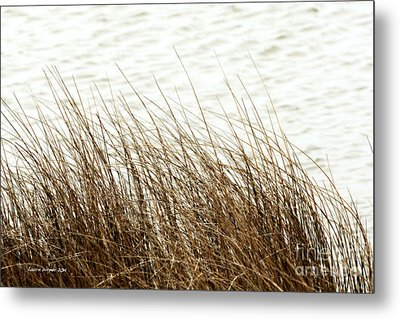 Grass Down By The Shore Of Virginia Beach Metal Print by Artist and Photographer Laura Wrede