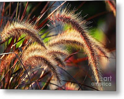 Grass Ears Metal Print
