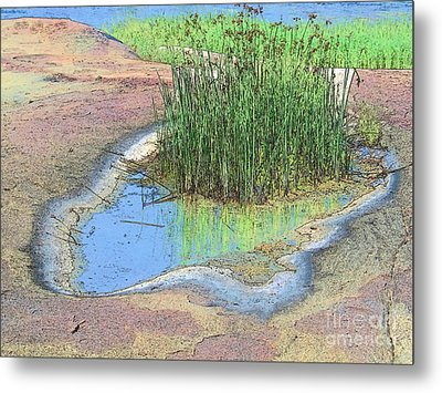 Grass Growing On Rocks Metal Print