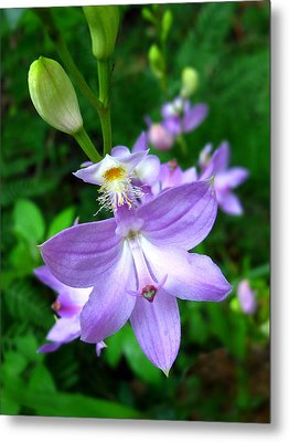 Grass Pink Orchid Metal Print