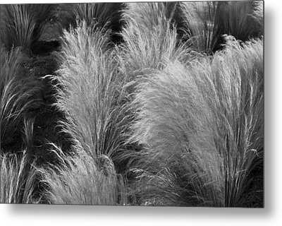 Grass Metal Print by Randal Bruck