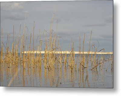 Grass Work Metal Print by Eugene Bergeron