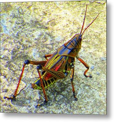 Grasshopper Beauty Metal Print