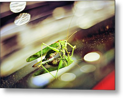 Grasshopper Disco Metal Print by Gynt