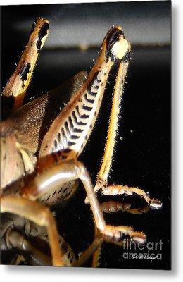 Grasshopper Legs Metal Print by Nola Hintzel