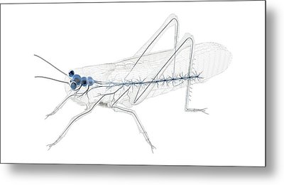 Grasshopper Nervous System Metal Print