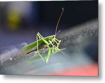 Grasshopper On The Car Windscreen. Metal Print by Gynt