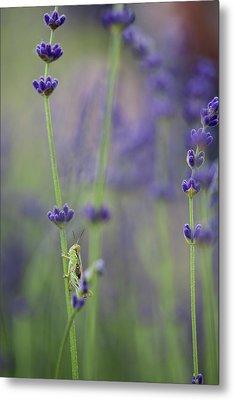 Grasshopper With Lavender Metal Print