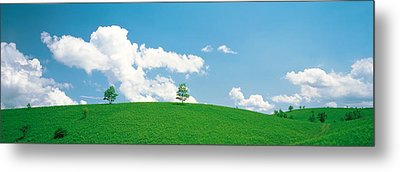 Grassland With Blue Sky And Clouds Metal Print by Panoramic Images