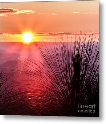 Grasstree Sunset Metal Print