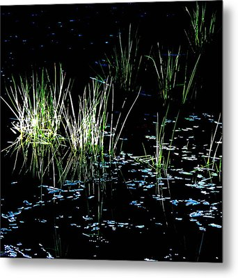 Metal Print featuring the photograph Grassy Lights by Suzy Piatt