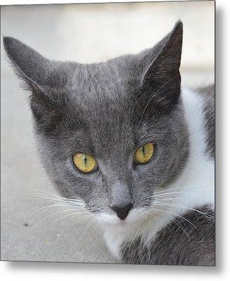 Gray Cat - Listening Metal Print