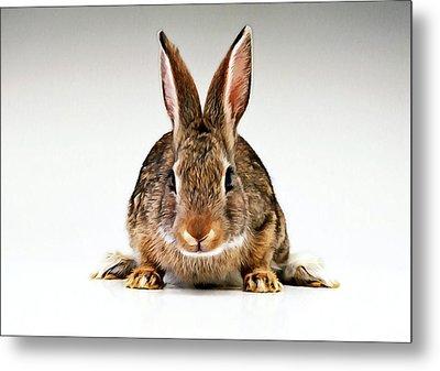 Gray Rabbit Bunny  Metal Print by Lanjee Chee