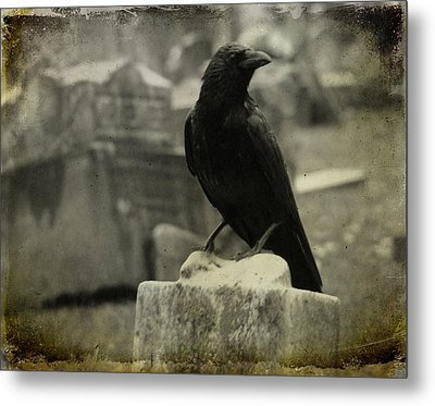 Gray Rainy Day Raven In Graveyard Metal Print by Gothicrow Images