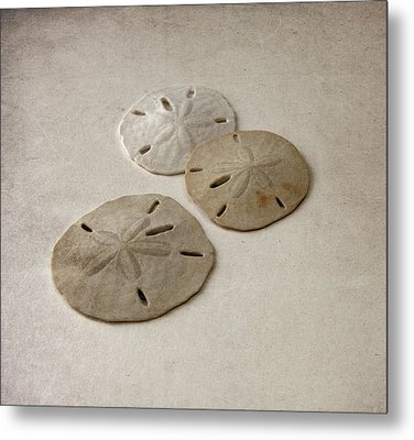 Gray Taupe And Beige Sand Dollars Metal Print by Brooke T Ryan