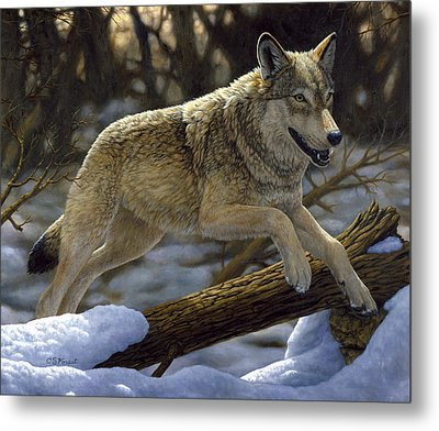 Gray Wolf - Just For Fun Metal Print by Crista Forest