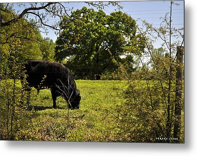 Grazing Alabama Metal Print by Verana Stark