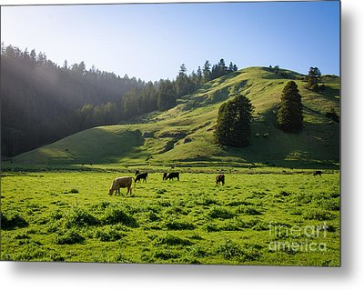 Grazing Hillside Metal Print by CML Brown