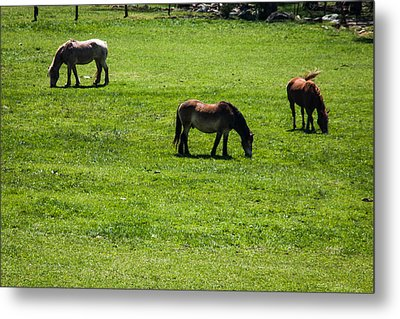 Metal Print featuring the photograph Grazing Horses by Jay Stockhaus