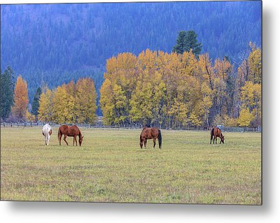 Grazing Horses Winthrop Western Metal Print by Tom Norring