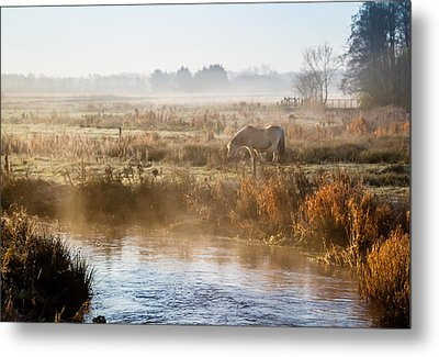 Grazing In The Mist Metal Print by Odd Jeppesen